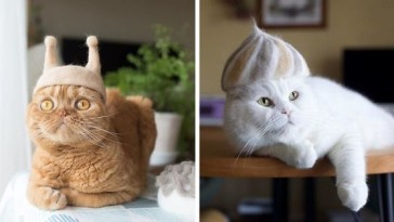 cats-in-hats-made-from-their-own-hair-part-2-fb47-png__700