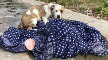 dog-found-abandoned-on-blankets-11-e1562955637727